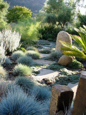 Mexican bamboo grass serves as a background to groundcovers Festuca and Thyme as they envelop flagstone steppers. All very low water users.