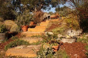 Native Plantings #010 by Paradise Environments