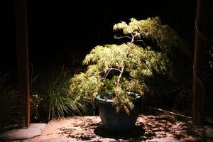 Down lit japanese, Waterfall,   Maple using a warm amber lense and halogen bulb