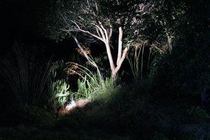 Uplit oak and native grasses using a  cool white  LED bulb  highlights the bark & foaliage of the Coast Live Oak where as other bulbs would not.