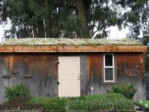 Green roof composed of assorted sedums.