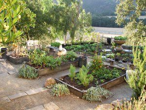 Winter veggie plantings provide an abundance of edible greenery.