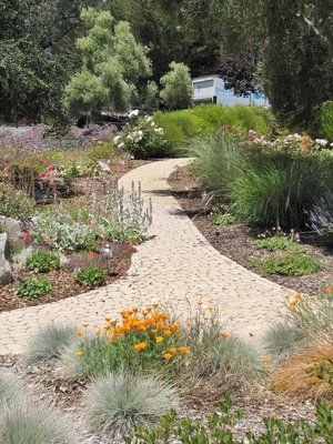 'Old World' mortarless cobbles provide access up slope through a garden composed of Stachys byznatina 'Silver Carpet', California poppies, Blue Fescue, Heuchera maxima, Miscanthes s. 'Morning Light', Rosa iceberg, Statice, Geranium sanguineum...