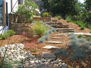 Flagstone steppers leading to the drystack steps. Fescue, heuchera, miscanthes, and coleonema serve as the foundation plants. A drystack wall was incorporated into the landscape to provide a jacaranda tree an area to be planted to the left of the photo.