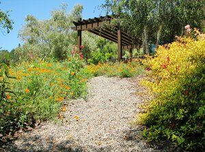 Pea gravel foot path that meanders through a perennial garden composed of Fuchsia magellanica 'Golden Sharpitor', Assorted  yarrows and Lavendula province as well as seeded poppies.