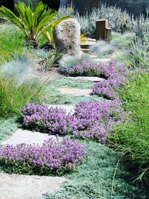 Flagstone steppers planted with Wholly thyme and lemon scented thyme. Spanish lavender is located to the back right hand side with meadow grass flanking the right side of the thyme.